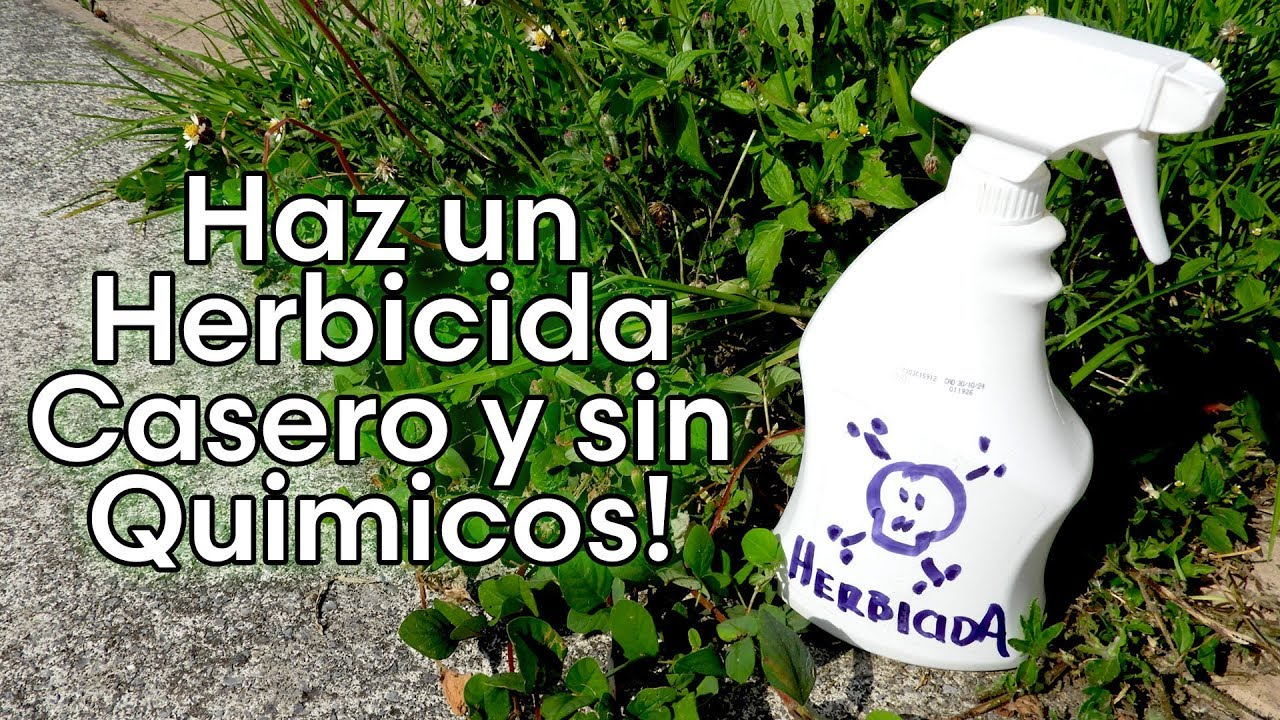 6 Herbicidas Caseros que puedes usar sin contaminar el medio ambiente