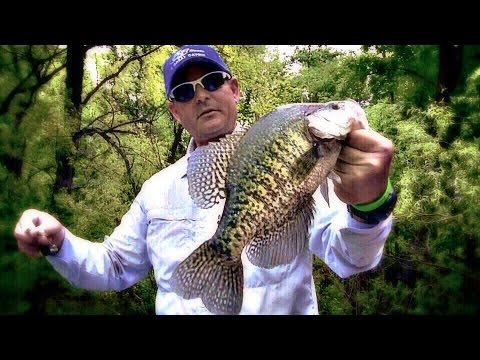 Catching Crappie Shallow During Mid Summer