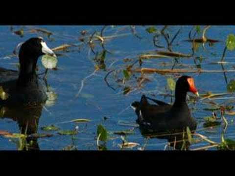 Viera, Florida Wetlands