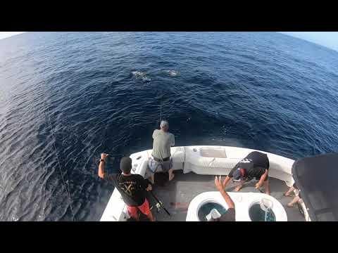 Offshore Fishing Report Wide Open Tuna Dana Point 2019