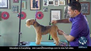 Grooming the Lakeland Terrier (FREE PREVIEW)