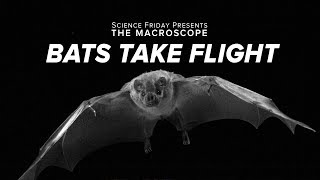Bats Take Flight