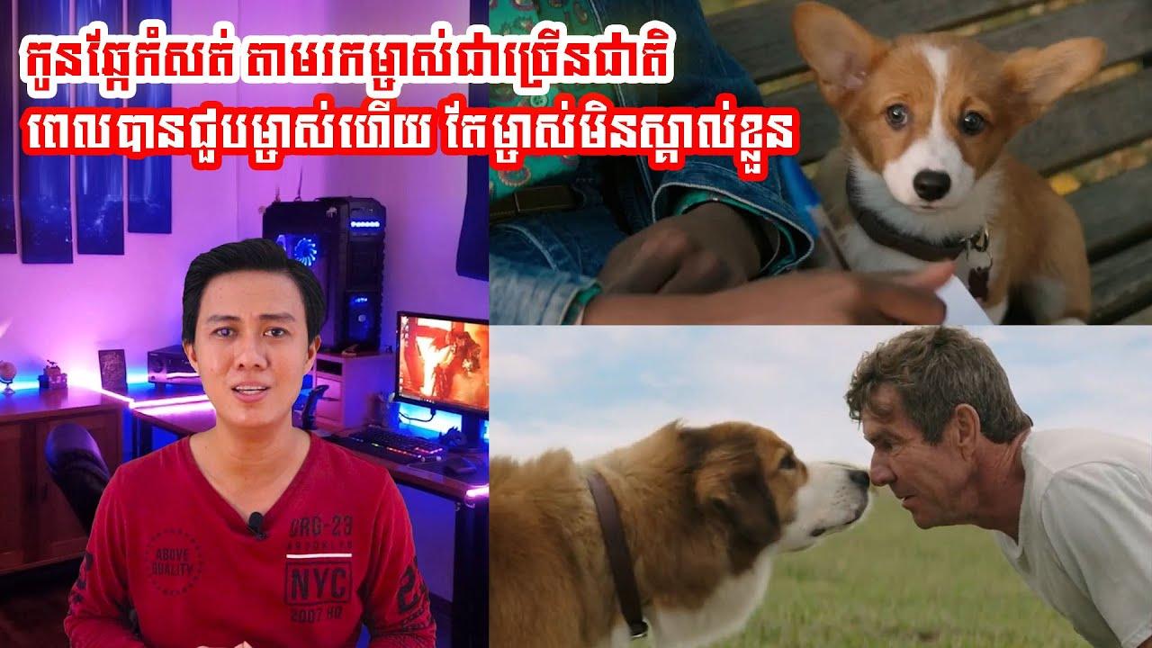 A Dogs Purpose សម្រាយរឿង Movie review សម្រាយសាច់រឿង