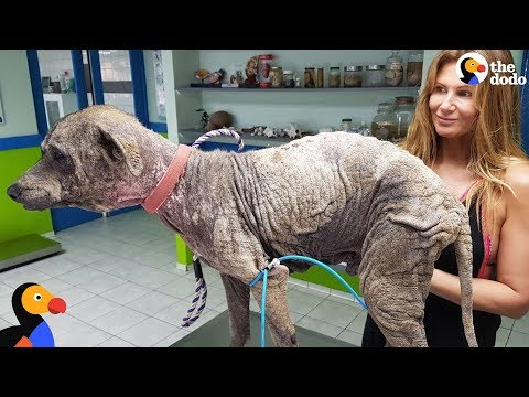Woman Rescues Sick Dog During Her Vacation  | The Dodo