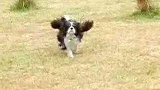 Gunther Running