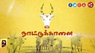 Naattukkaalai | Jallikattu and native breed bulls | All you need to know