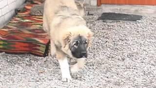 В Харькове появились психологи для собак и кошек(http://objectiv.tv/130213/80753.html - В Харькове появились психологи для собак, кошек и лошадей - Современные животные страд..., 2013-02-14T01:16:39.000Z)