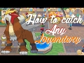How To Catch Entei! Monster Park/Hey Monster