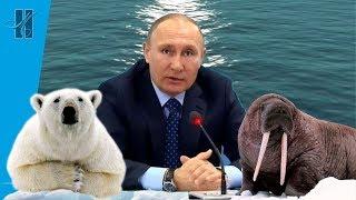 """Моржи"" на прямой линии с Президентом. Зимнее плавание."