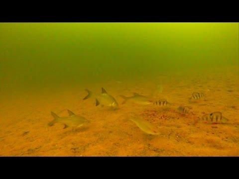 ловля ротана зимой подводная съемка