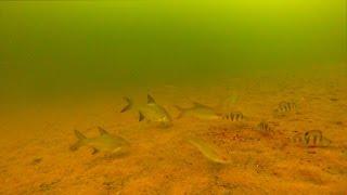 Камера на зимней рыбалке, Подводные съемки подо льдом(Подводные съемки рыбалки в Подмосковье 2014-2015. Подводная камера для рыбалки онлайн. Много рыбы, её реакция..., 2015-02-21T19:58:10.000Z)