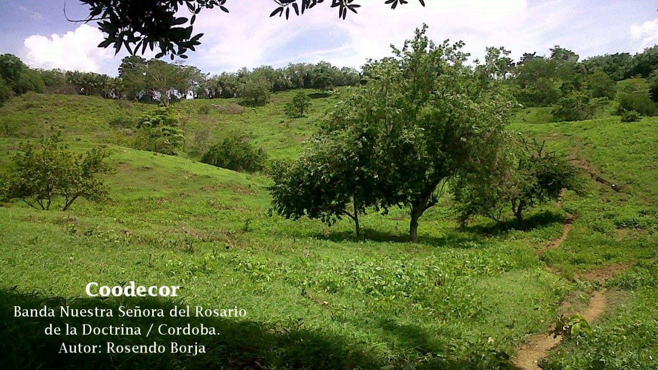 Coodecor - Banda Nuestra señora del Rosario de la Doctrina / Cordoba.