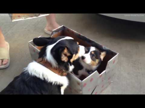 Watch as these dog brothers meet for the first time