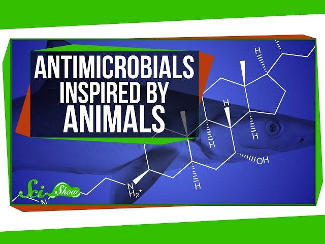 Antimicrobials Inspired by Animals