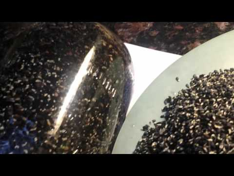 Sprouted black and brown sesame seeds