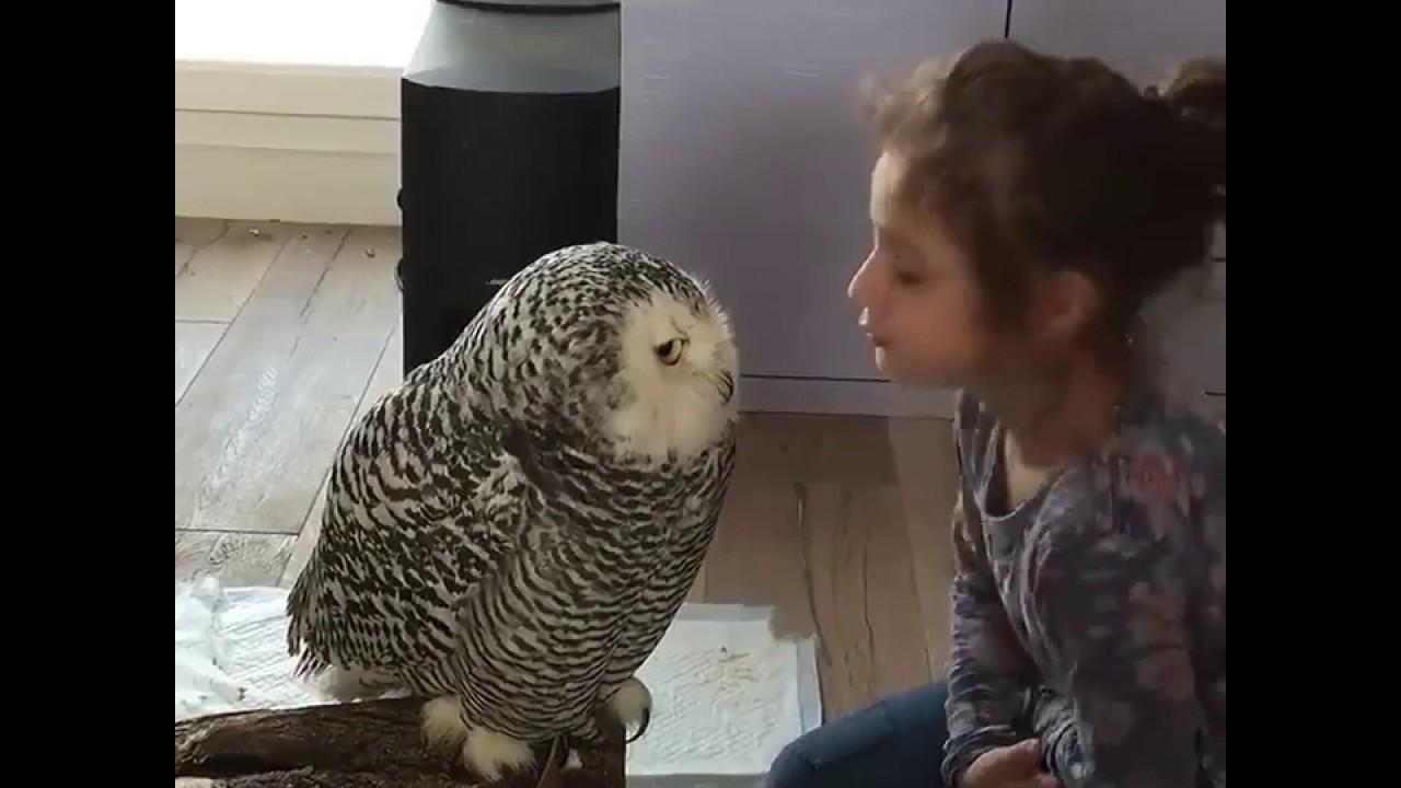 Hibou Ou Chouette histoire d'amour entre une petite fille et son hibou chouette
