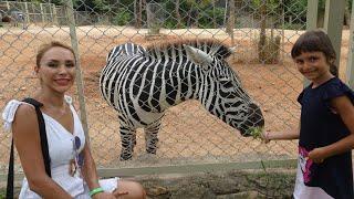 Antalya Hayvanat Bahçesi Gezimiz! Çekirdek Çitleyen Maymunu Çok Sevdik