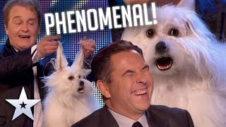 OMG it's a TALKING DOG! I Auditions I BGT Series 9