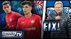 Havertz 2020 teurer als Coutinho – Fix: Klinsmann neuer Hertha-Trainer | TRANSFERMARKT
