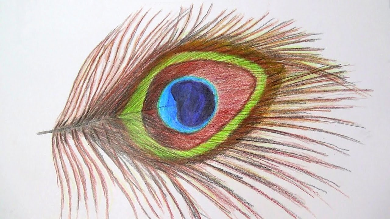 Uncategorized How To Draw Peacock Feathers peacock feather drawing with pencil how to draw a feather