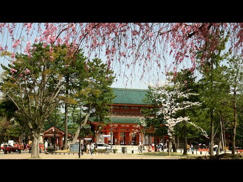 yajiさんの旅の道草 京都 平安神宮の紅八重枝垂れ桜【Heian Jingu Shrine,Red yae weeping cherry tree】