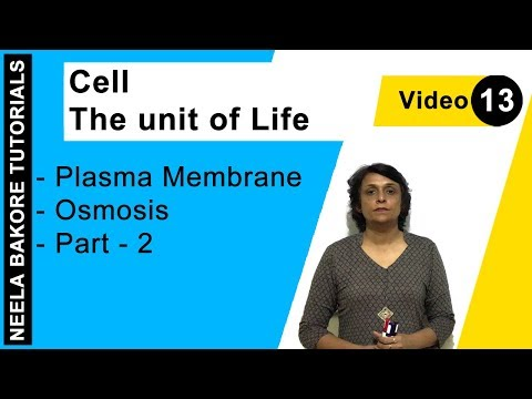 Cell - The Unit Of Life - Plasma Membrane - Osmosis - Part - 2