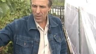 видео Как спасти рассаду от поздних заморозков