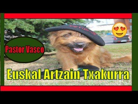 🛑El Perro Pastor Vasco - Euskal Artzain Txakurra - Basque Shepherd Dog - Jose Arca 🛑