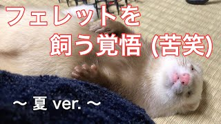 Are you ready keep a ferret? フェレットパパになって初めての 『エア...