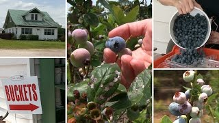 Prime time for berry picking and kicking back at Groveland farm