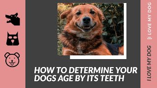 how to determine your dogs age by its teeth- how to calculate your dog age -  dogs age by its teeth