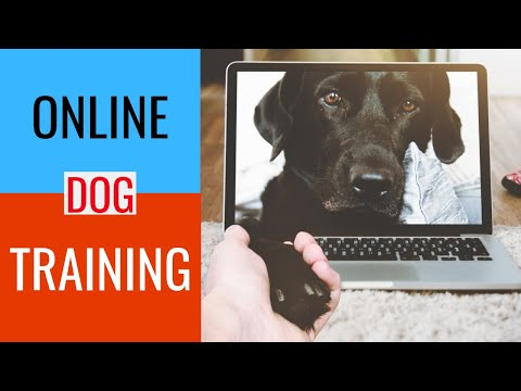 online-dog-obedience-training