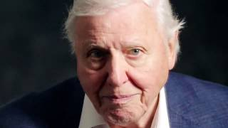 A Reason for Hope from Sir David Attenborough - Our Planet