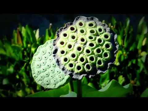 Japanese Garden in Van Nuys, Caliifornia