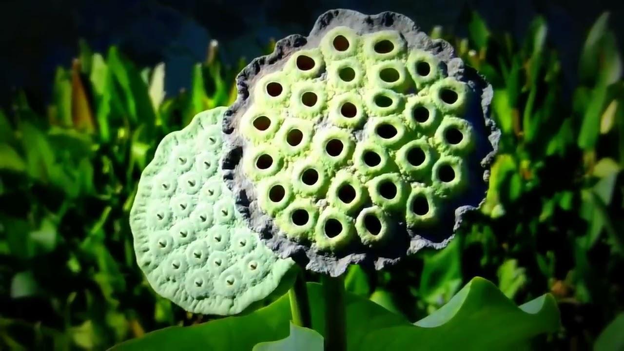 Japanese Garden In Van Nuys Caliifornia Youtube