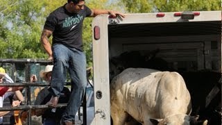 PBR Philadelphia bull weigh-in