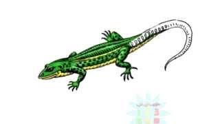Нарисуй картинку тема животные учимся рисовать как рисовать животных Черепаха Хомячок Ящерица