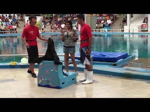 Live Dolphin  and Seal performances  , Sentosa island  ,Singapore.