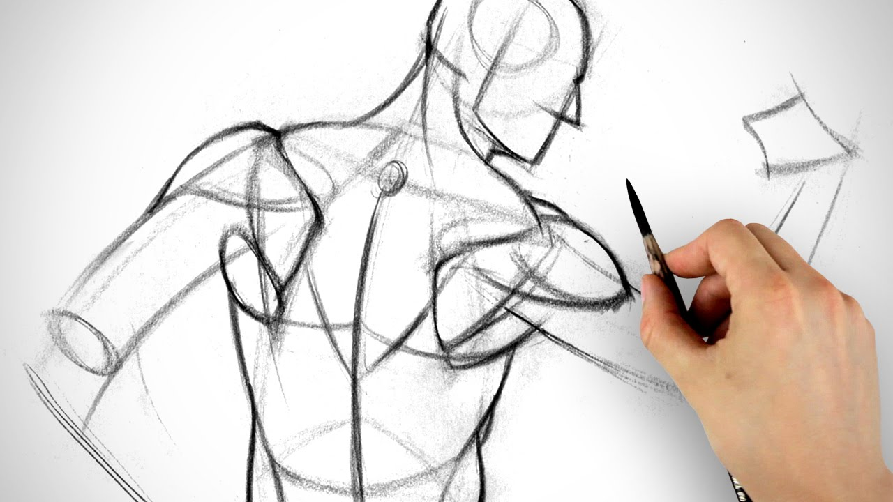 This is a photo of Hilaire Back Muscle Drawing