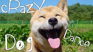 CRAZY DOG DANCE или КОГДА ДО КАНИКУЛ 10 ДНЕЙ
