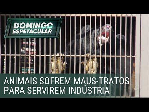 Ursos sofrem maus-tratos para servirem à indústria de remédio na Ásia