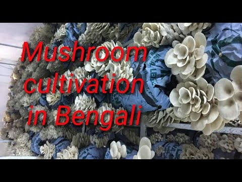 Mushroom cultivation in Bengali at home