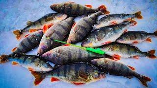 ЕСЛИ БЫ НЕ ОНА БЫЛИ БЫ БЕЗ РЫБЫ ловля окуня на балансир безмотылку зимняя рыбалка на окуня горбач
