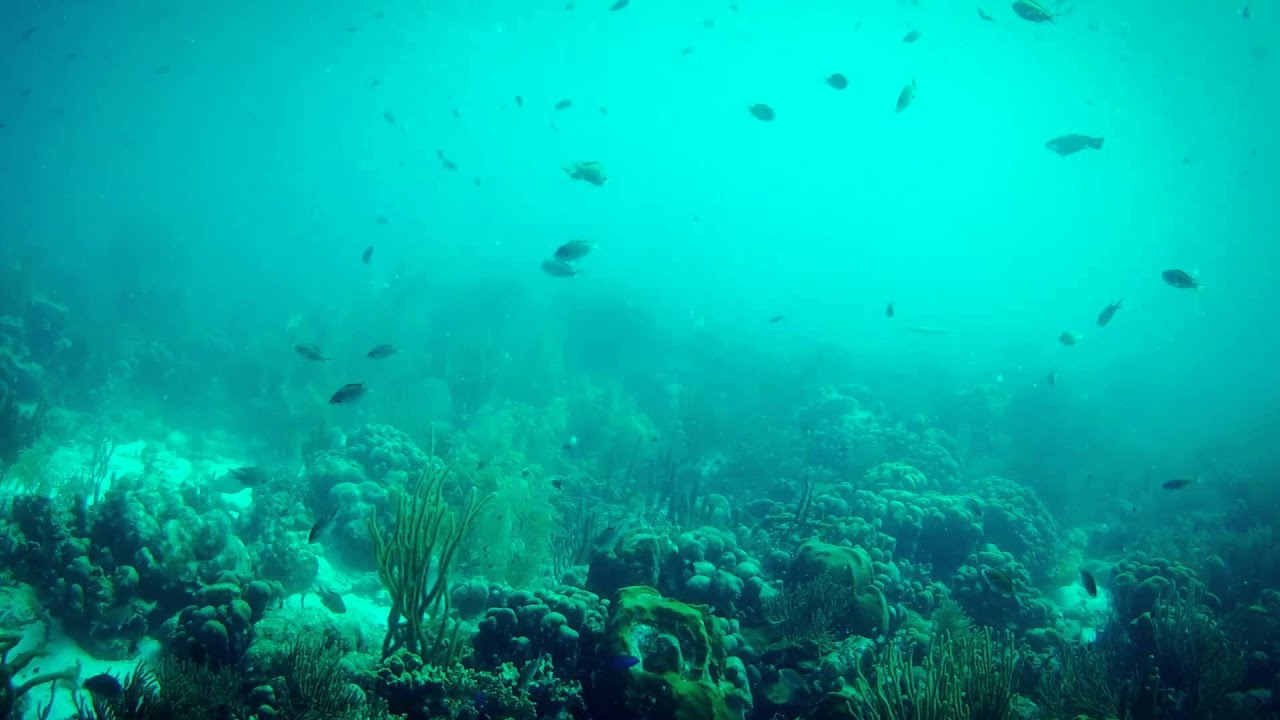 4205 buceando en arrecife peces nadando fondo mar oscuro - Fotos fondo del mar ...