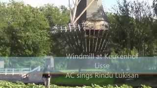 Windmill at Keukenhof - AC sings Indonesian Bossa Nova