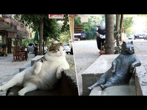 In Memory Of Istanbul's Phenomenal Cat - Tombili 4K UHD 2160p