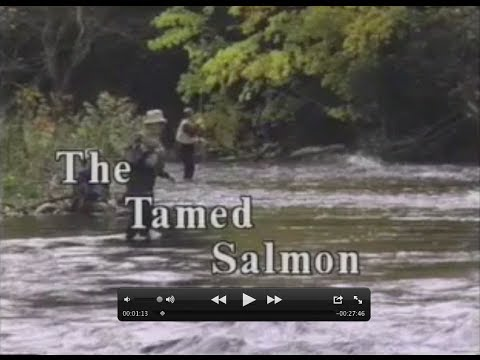 The Tamed Salmon