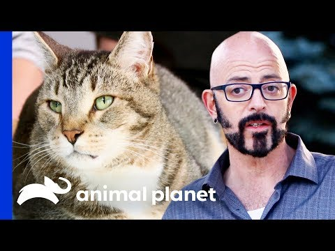 Can Jackson Galaxy Put An End To Zachary's Accidents? | My Cat From Hell