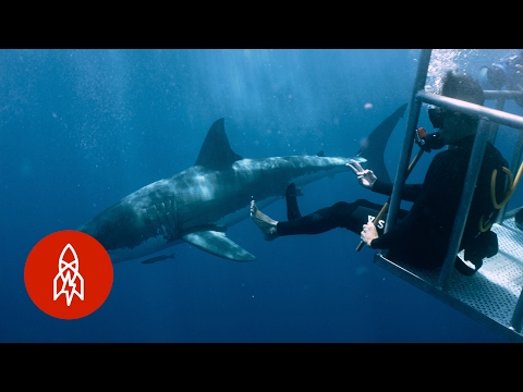 A Shark Attack Survivor Jumps Back In the Water