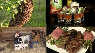 Pepper Rubbed Grilled Steak, Wrapped Asparagus, Oyster Shooters and a Bee Swarm